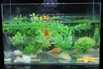 Các-mẫu-đèn-led-bể-cá-đang-được-sử-dụng-phổ-biến-hiện-nay-1